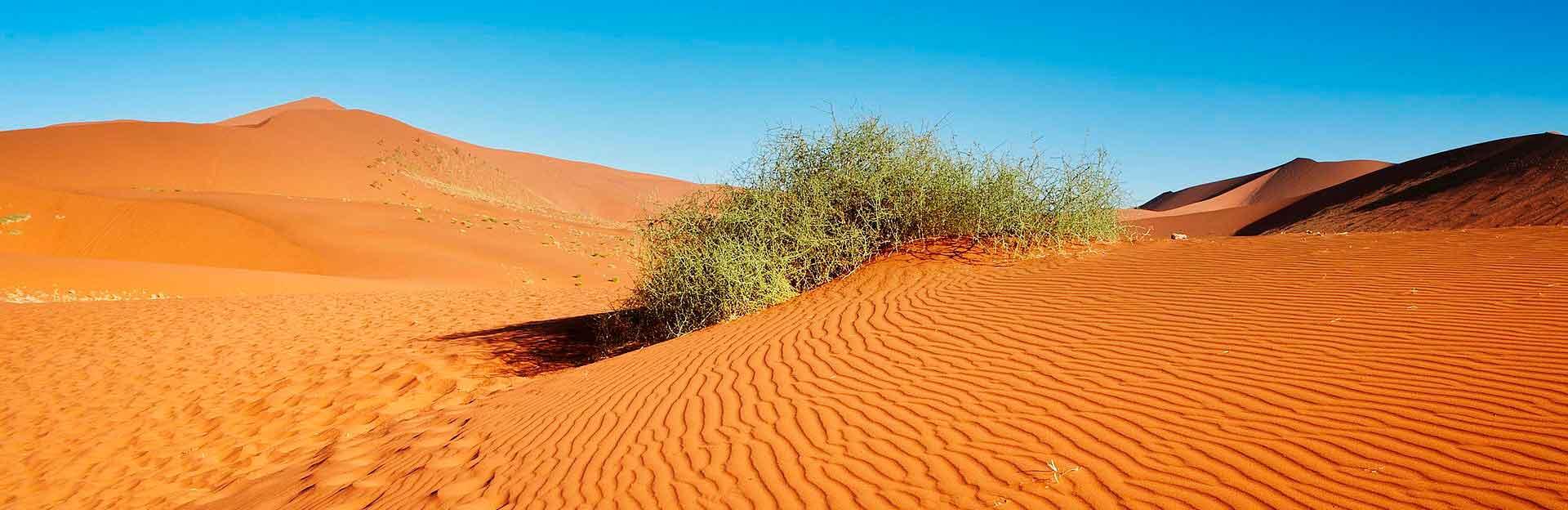 Суто Українська пустеля